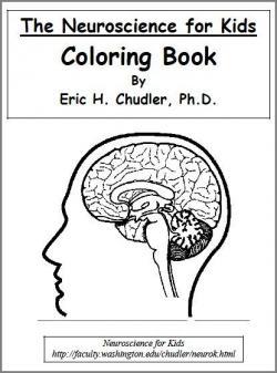 Neuroscience Coloring Books