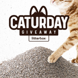 Caturday Giveaway prize ilustration
