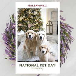 Balsam Hill Pet Day Giveaway prize ilustration